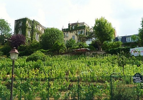 Team building, Visit the vineyard of Montmartre - 4
