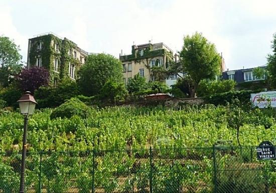 Team building, Visit the vineyard of Montmartre - 4