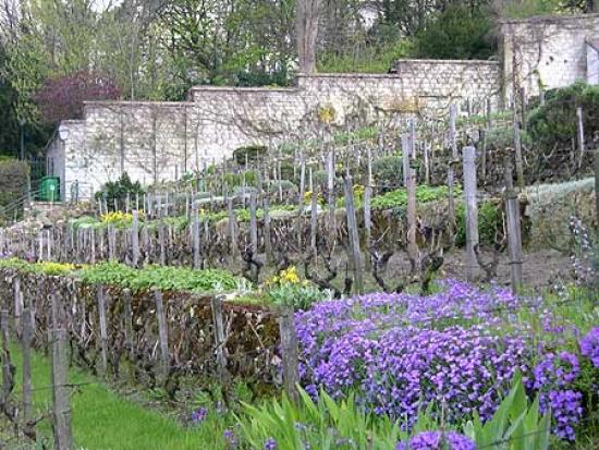 Team building, Visit the vineyard of Montmartre - 2